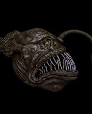 anglerfish (2)