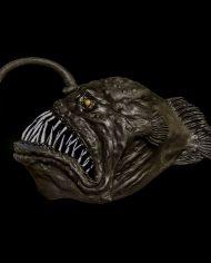 anglerfish (5)