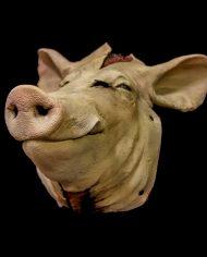 pig (11)