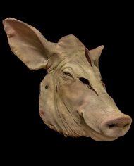 pig (13)