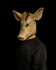 pig (3)