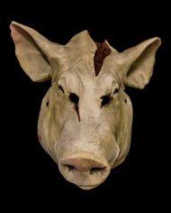 pig (7)