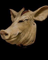 pig (9)